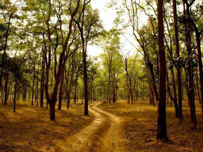 pench-forest-safari-tour-medium-3