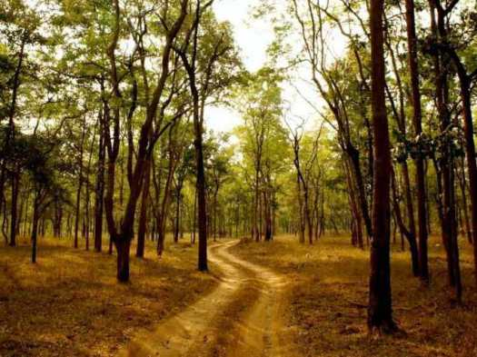 pench-forest-safari-tour-medium-3